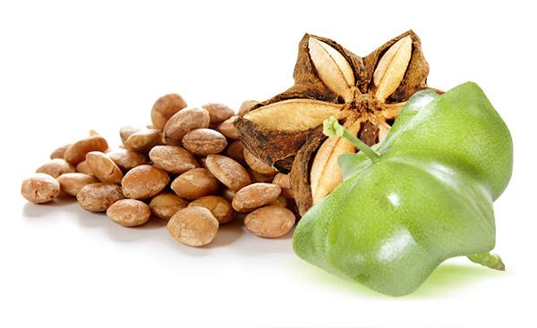 Cách dùng hạt sachi như thế nào để đảm bảo đủ các chất dinh dưỡng